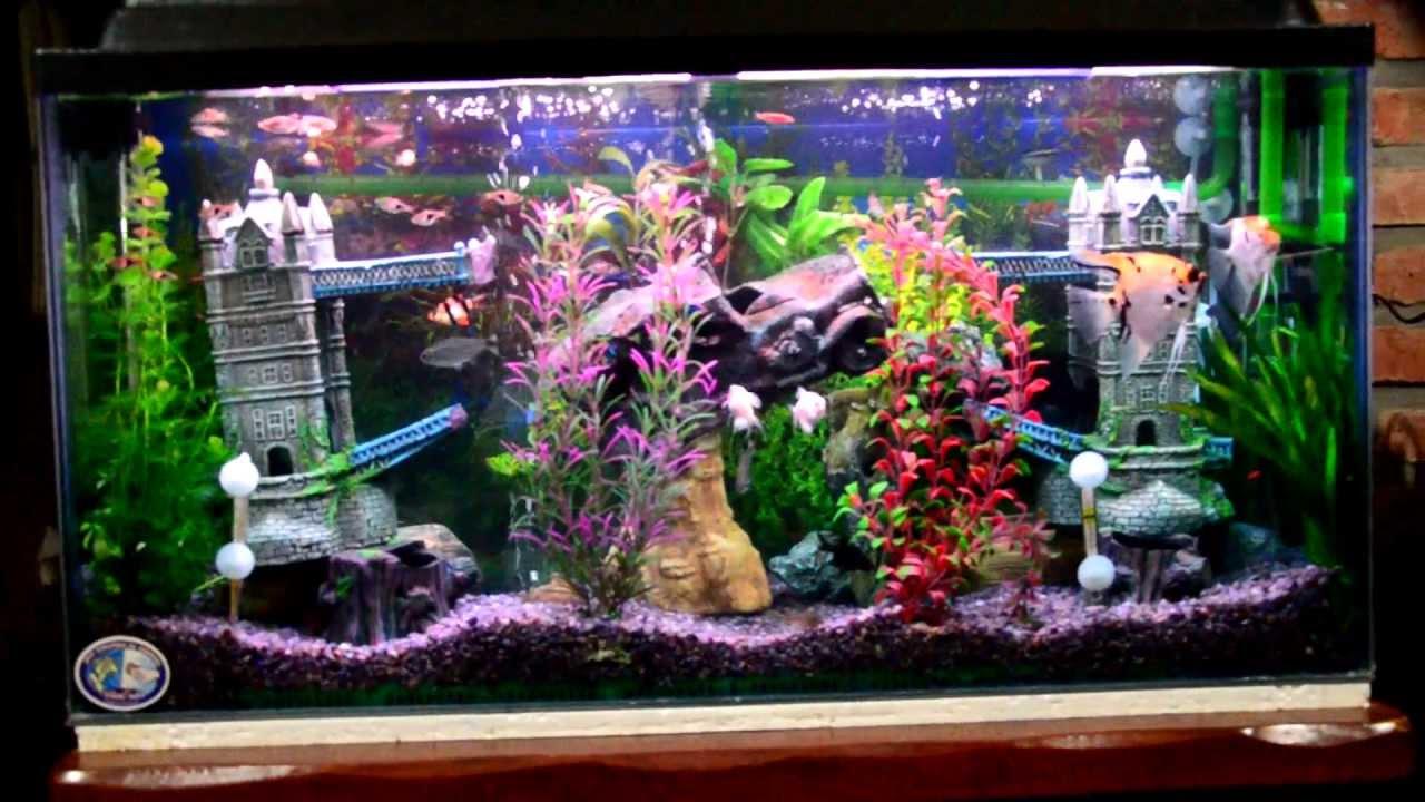 Mi acuario peces de aguas tropicales 150 litros hd i jab - Pecera de pared ...