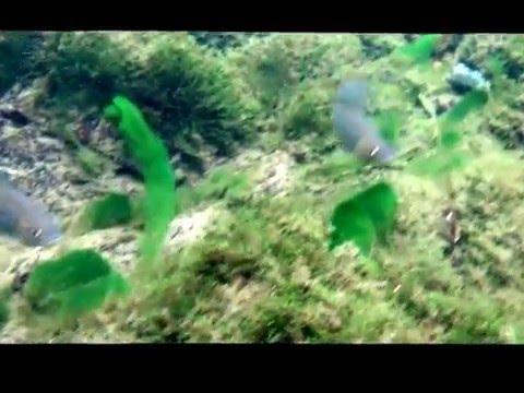 ловля хариуса на реке коппи