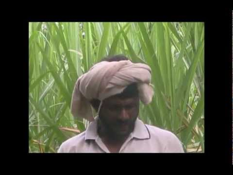 Nutrient management in coconut Kannada BAIF Karnataka