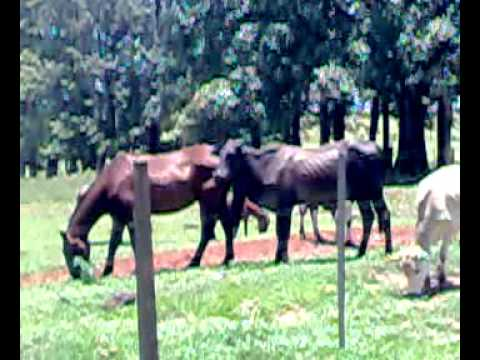Cavalo Gay.mp4 video