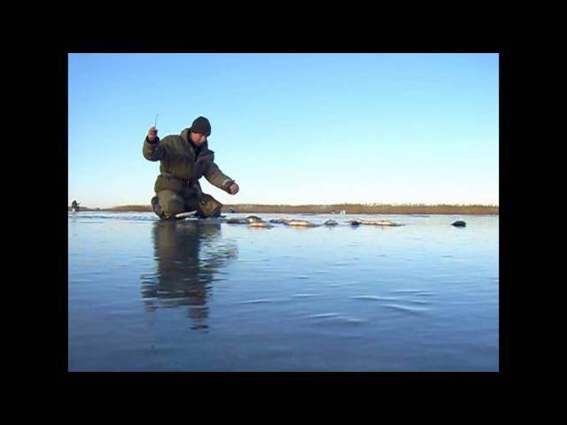 видео ролики о рыбалке на окуня