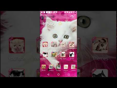 Pink Persian white Cat theme APK Cover