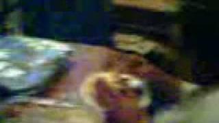 Christmas Dinner 2004 (M.P) Mobile Movies(3).3gp