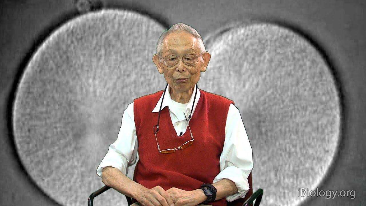 Shinya Inoue Net Worth