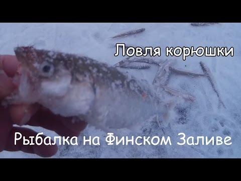 лов корюшки на финском заливе видео