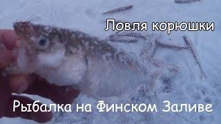 рыбалка на окуня на финском заливе