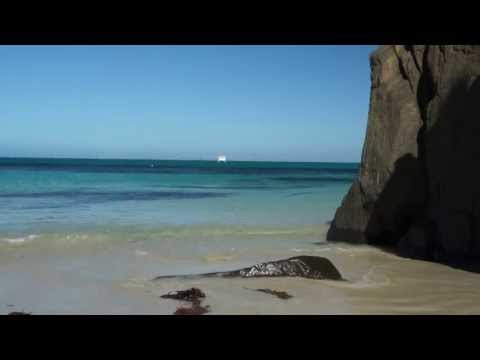 Tasmania Bound Vol 29 Devonport to Waterhouse Island