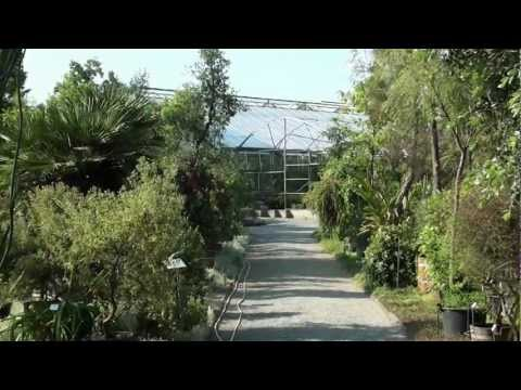 Dresden - Botanischer Garten