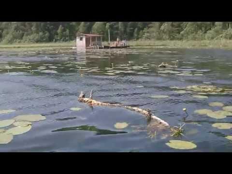 рыбалка в данилово цена