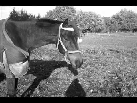 Abschied von einem Wundervollen Pferd