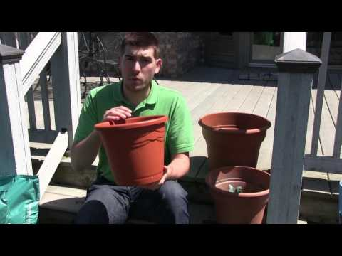 Complete Starter Guide for Successful Patio Gardening