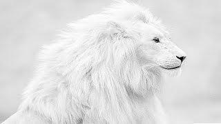 وثائقي الأسد الأبيض - عالم الحيوانات المفترسة