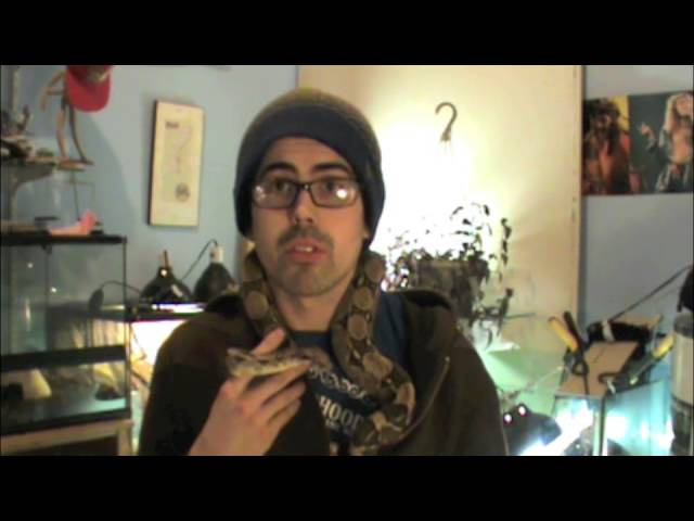 Thinking about reptile care #2 Lighting