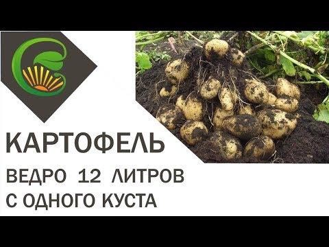 Органическое земледелие как сажать картофель 44