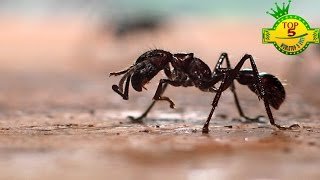 Top 5 Most Painful Insect Bites