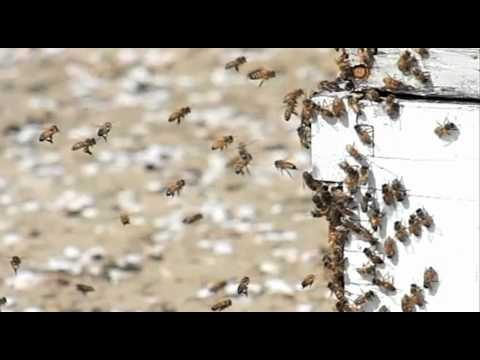 Vanishing of the Bees - Beekeeper Leaks EPA Document