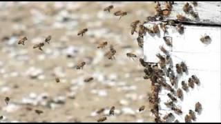 Vanishing of the Bees - Beekeeper Leaks EPA Document