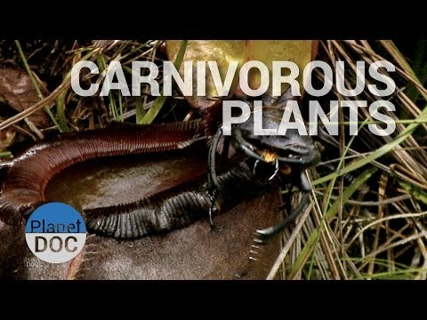 Carnivorous Plants | Nature - Planet Doc Full Documentaries