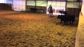 Peenk- Jared Lesh Cowhorses