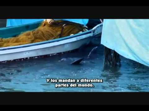 The cove Resumen en español..