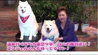 全国看板犬コンテストで「見事に全国一位」・エンジェル犬