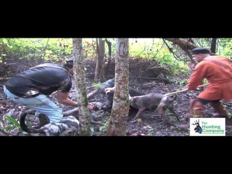SPEAR HUNTING WILD BOAR HOGS! With Renaissance Men in MS with South Coast Safaris