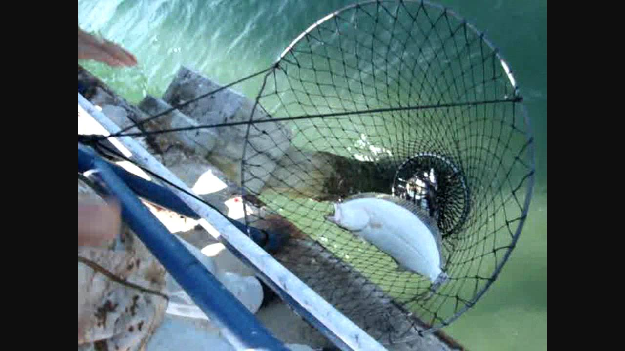 A halibut fishing in san diego bay 15 october youtube for Fishing license san diego