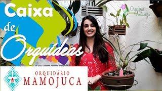 Novas Orquídeas recebidas do Orquidário Mamojuca.