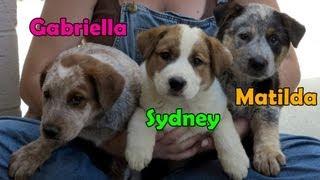 Dog rescue in central California (Gaia, Sydney, Matilda & Gabriella) - Please share.