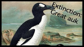 Extinction of the Great Auk