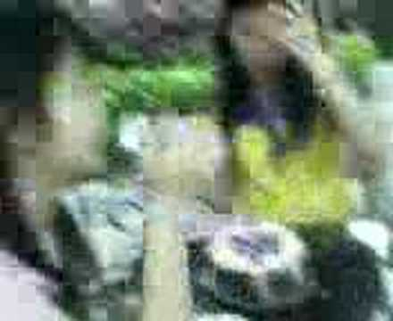 Indonesian Girls... video