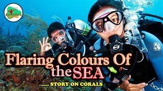 "Flaring Colours Of The Sea - ""A Story on Corals"" (Coelenterata I Anthozoa I Coral Ecosystem)"