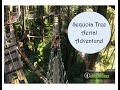 Red Tree Canopy Tour | Felton,CA
