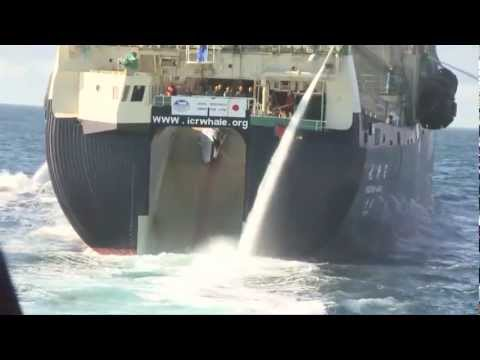 Bob Barker Encounter with Yushin Maru 2 Transfers Poached Whale to Nisshin Maru