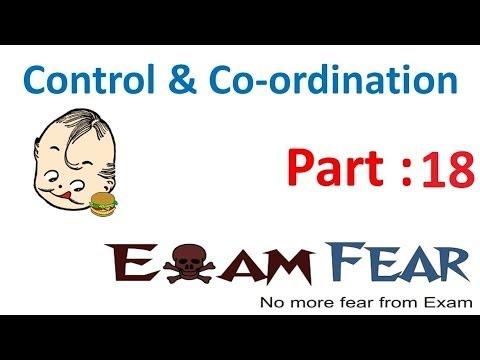 Biology Control & Co-ordination part 18 (Human Brain:  CNS, Structure & parts) CBSE class 10 X
