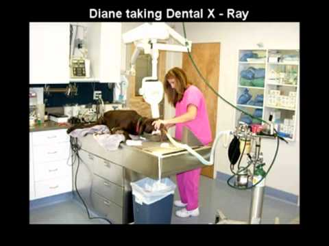 Croton Animal Hospital | Veterinarian Croton on Hudson New York | Putnam County Vets
