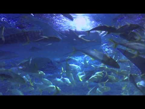 Yantai, China - Whale Shark Aquarium