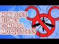 Why Are There No Mosquitoes at Disney World?