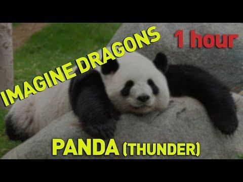 Imagine Dragons - Panda (Thunder) 1 hour