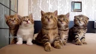 Chú mèo con - Nhac thieu nhi vui nhon cho be an ngon mieng