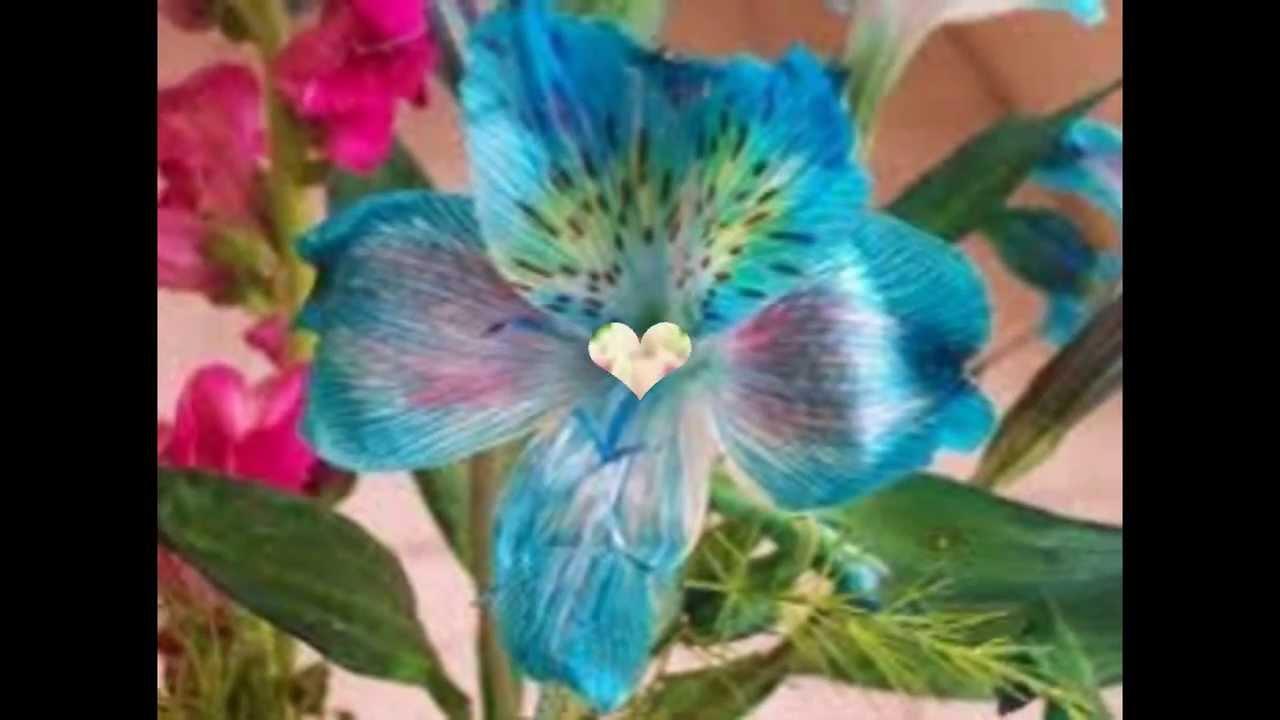 Las flores mas hermosas del mundo xd youtube - Flores mas bonitas ...