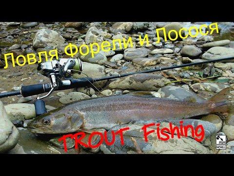 ловля дунайського лосося