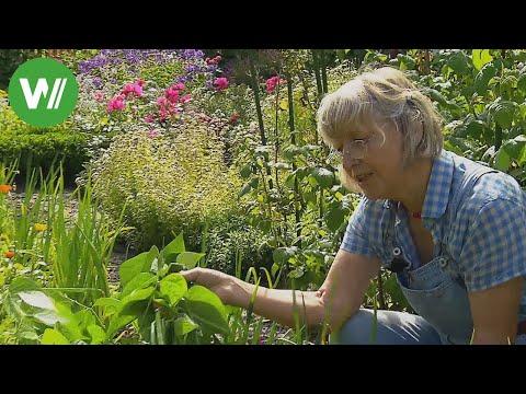 Der Garten im August