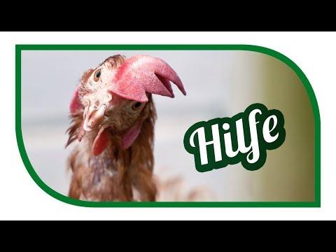 Rettet das Huhn