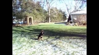 John Sullivan Dog Trainer