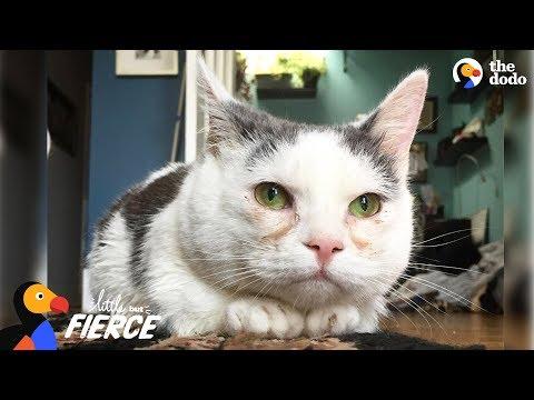 Cat with Short Legs Looks Like a Tiny Potato - GISELLE | The Dodo Little But Fierce