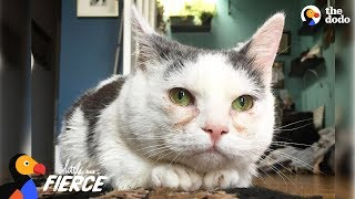 Cat with Short Legs Looks Like a Tiny Potato - GISELLE | The Dodo Little But Fierce