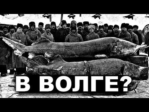 Куда делась БОЛЬШАЯ рыба и ЖЕМЧУГ из рек России?