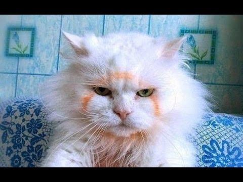 Приколы и смешные моменты из жизни животных/смешное видео про котов и собак