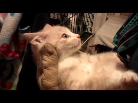 Feral kitten rescue June 14th UPDATE  -  VERY VERY SWEET!!!